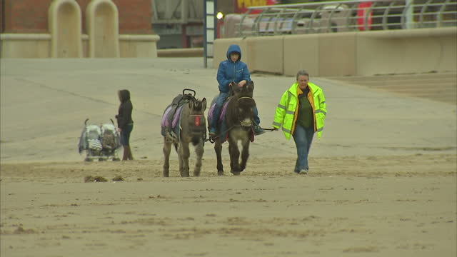 vidéos et rushes de exterior shots of a child being led on a donkey ride along blackpool beach on a cold overcast day>> on march 15 2015 in blackpool united kingdom - équidés