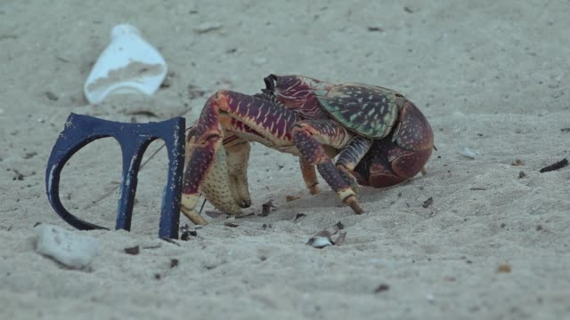 exterior shots of a crab scuttling along a beach on the aldabra atoll past plastic waste on 17 march 2019 on the seychelles - granchio video stock e b–roll
