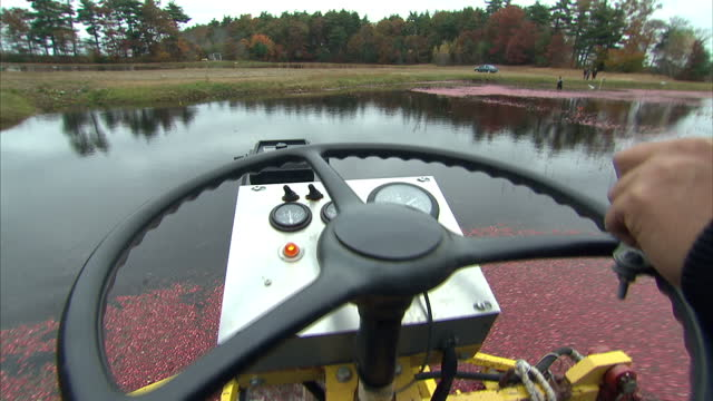 exterior shots of a cranberry farmer on board a water borne combine harvester harvesting a crop of cranberries on december 17, 2009 in carver,... - cranberry stock videos & royalty-free footage