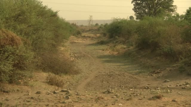 exterior shots of a dry river bed and a man driving a cattledrawn cart through a rural village setting on 4 april 2019 in maharashtra india - maharashtra stock-videos und b-roll-filmmaterial