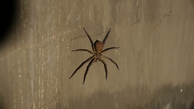 Exterior shots of a large spider on a wall on February 23 2015 in Hanoi Vietnam