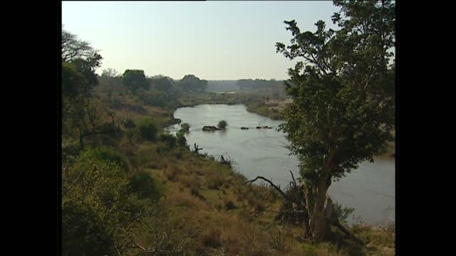 vídeos de stock, filmes e b-roll de exterior shots of a major river on july 26, 2002 in kruger national park, south africa. - áfrica meridional