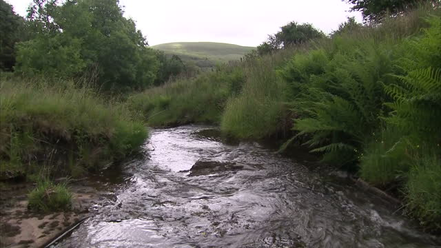 exterior shots of a mountain stream in pontardawe on july 03, 2016 in swansea, wales. - south wales stock videos & royalty-free footage