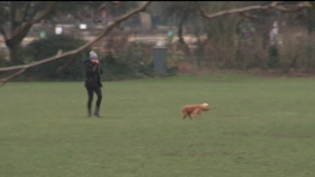 exterior shots of a park in fulham with people walking dogs on 22 february 2018 in london england - playing stock videos & royalty-free footage