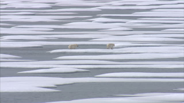 exterior shots of a polar bear mother and her two cubs in the wild walking across ice floes in the north west passage. on august 25, 2007 in... - icecap stock videos & royalty-free footage