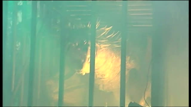 exterior shots of a robot dragon in a cage breathing fire at the premiere of harry potter and the goblet of fire. on november 06, 2005 in london,... - harry potter titolo d'opera famosa video stock e b–roll