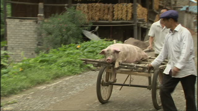 exterior shots of a rural community preparing local vegetables for drying including corn and chilli flakes and geese walking through the local... - drying stock videos & royalty-free footage