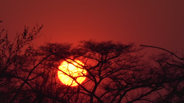 exterior shots of a setting sun over a wildlife reserve on 22 september 2016 in namibia - namibia stock videos & royalty-free footage