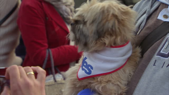exterior shots of an anonymous man holding his dog which is dressed in 'yes for scottish independence clothes' on september 17 2014 in edinburgh... - human age stock videos & royalty-free footage