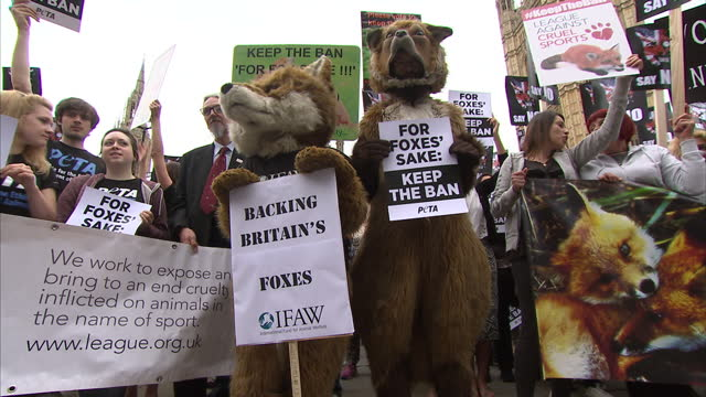 Exterior shots of anti Fox Hunting animal rights protesters outside the Houses of Parliament in Westminster some protesters wearing fox costumes and...