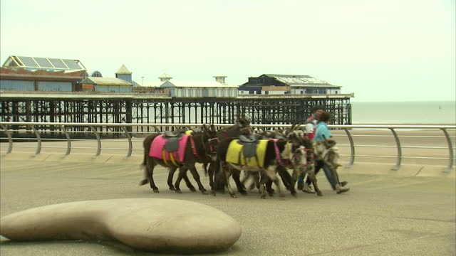 vidéos et rushes de exterior shots of beach donkeys being led along the blackpool seafront and down on to the beach on a cold overcast day>> on march 15 2015 in... - équidés