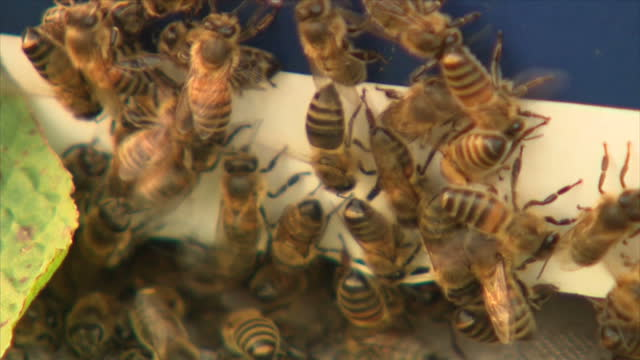 exterior shots of beehives on the edge of a field and closeup shots of honey bees milling around the entrance to one of the hives on november 09 2017... - bee stock videos & royalty-free footage