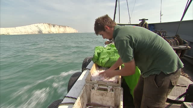 exterior shots of british fishing boat sailing off the east sussex coast with fisherman sorting through a catch of whiting on 28th august 2017... - east sussex stock videos & royalty-free footage
