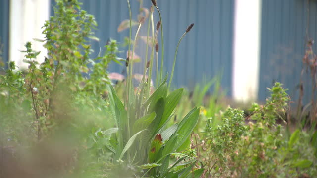 exterior shots of broad plain boys club and youth project building scene of the painting of an alleged banksy mural entitled 'mobile lovers' on april... - youth club stock videos & royalty-free footage