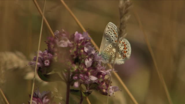 exterior shots of butterflies in a summer field on 26 july 2018 in york england - butterfly insect stock videos & royalty-free footage