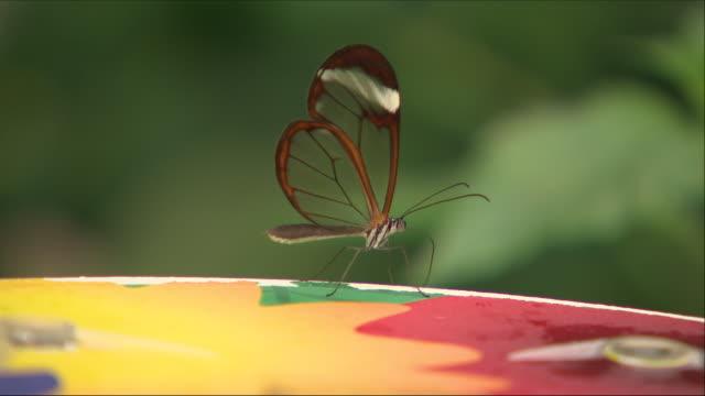 stockvideo's en b-roll-footage met exterior shots of butterflies in the london zoo on 20 july 2018 in london united kingdom - ongewerveld dier