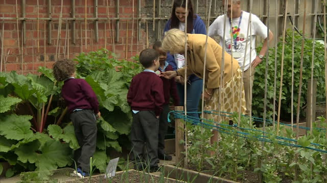 exterior shots of camilla, the duchess of cornwall walk into allotment allotment garden and help children cut rhubarb during her visit to kids in... - coloured background stock videos & royalty-free footage