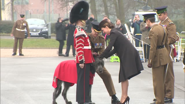 exterior shots of catherine, duchess of cambridge presenting traditional st patrick's day shamrocks to domhnall, the irish wolfhound regimental... - aldershot stock videos & royalty-free footage