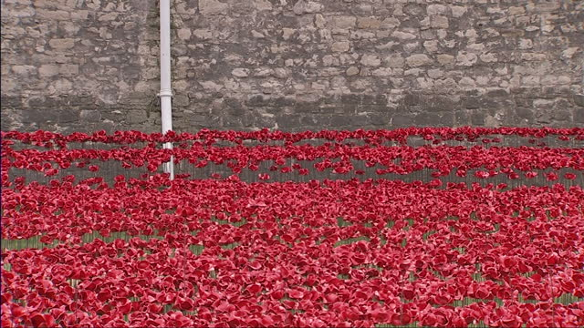 exterior shots of ceramic poppies in the grounds of the tower of london 'the blood swept lands and seas of red' exhibition by paul cummins 888246... - 100th anniversary stock videos & royalty-free footage