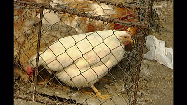 exterior shots of chickens in cages at a street market in beijing on november 26th 1999 in beijing china - käfig stock-videos und b-roll-filmmaterial