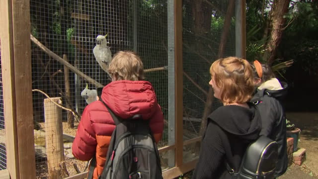 exterior shots of cockatiel birds in an aviary as visitors watch and take photos at birdworld bird park on 27 june 2020 in farnham surrey united... - zoo stock-videos und b-roll-filmmaterial