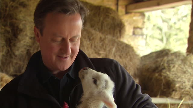 vídeos de stock e filmes b-roll de exterior shots of conservative party leader david cameron chatting to a farmer whilst bottle feeding a young lamb on april 05 2015 in chipping norton... - chipping norton england