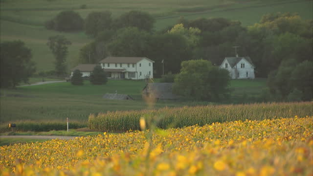 exterior shots of corn on the cob growing in a field of maize and a remote farmhouse nestled in the valley of several fields on october 22 2014 in... - nebraska stock videos & royalty-free footage