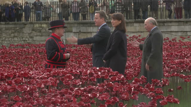 exterior shots of david cameron and wife samantha inspecting poppy display and talking to a beefeater on a tour of the tower of london moat on... - moat stock videos & royalty-free footage
