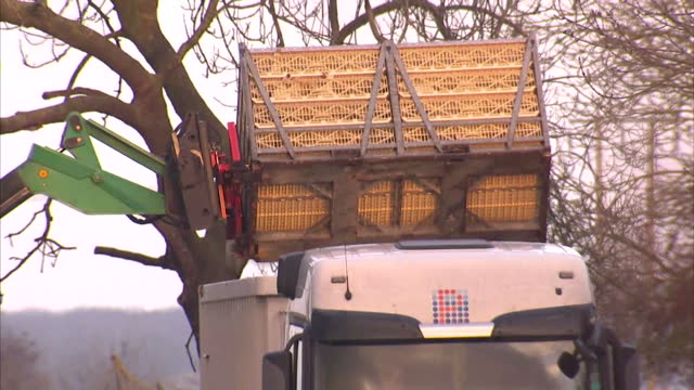 exterior shots of defra workers in full protective contamination suits taking away dead birds from bird flu contaminated farm, bird cages being... - virus dell'influenza aviaria video stock e b–roll