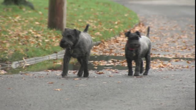exterior shots of dog owners in a public park walking various breeds of dogs on a winter day on 23 november 2019 in birmingham uinted kingdom - relaxation exercise stock videos & royalty-free footage