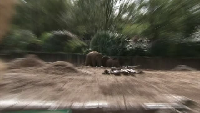 exterior shots of elephants roaming and eating at chester zoo on the 24th september 2020 in chester, england - 英国チェスター点の映像素材/bロール