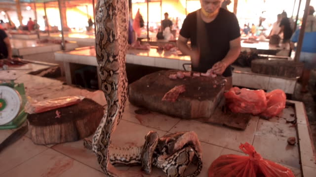 exterior shots of exotic animals at an animal market on 19 may 2020 in bangkok, thailand. - animal themes stock videos & royalty-free footage