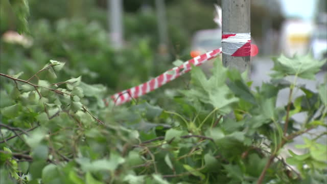 exterior shots of fallen tree branches and a damaged street sign following strong winds in hull>> on august 10 2014 in various cities united kingdom - キングストンアポンハル点の映像素材/bロール
