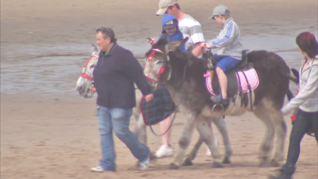 exterior shots of father and son playing cricket on beach. exterior shots of children enjoying donkey rides on beach. exterior shots of families on... - blackpool stock videos & royalty-free footage