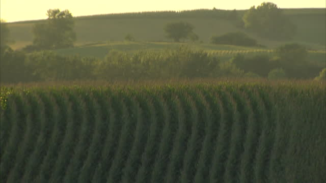 exterior shots of fields of mazie in rural nebraska at sunset on october 22, 2014 in neligh, nebraska. - willie nelson stock videos & royalty-free footage