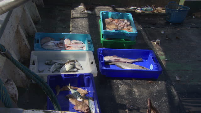 vídeos de stock e filmes b-roll de exterior shots of fisherman docking in alicante, with boxes of fish and seafood on deck and two fishermen emptying a bin full of plastic waste... - marisco