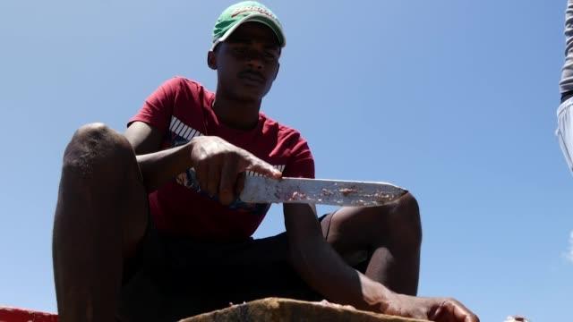 vídeos de stock e filmes b-roll de exterior shots of fishermen gutting a freshly caught fish on board a small fishing boat on 10 february 2018 in the seychelles - amanhar o peixe