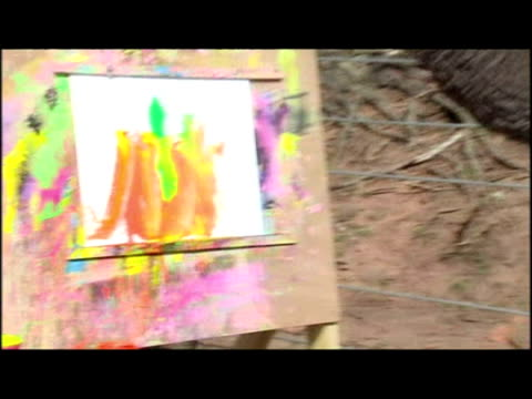 stockvideo's en b-roll-footage met exterior shots of 'five' the elephant walking in to enclosure exterior shots of elephant using paint brush to paint at easel sky news bizarre stories... - omsloten ruimte