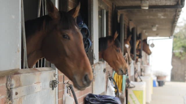 exterior shots of horses in stables with a stablehand stroking and feeding one horse with some carrots in newmarket on 2nd march 2021, united kingdom - feeding stock videos & royalty-free footage