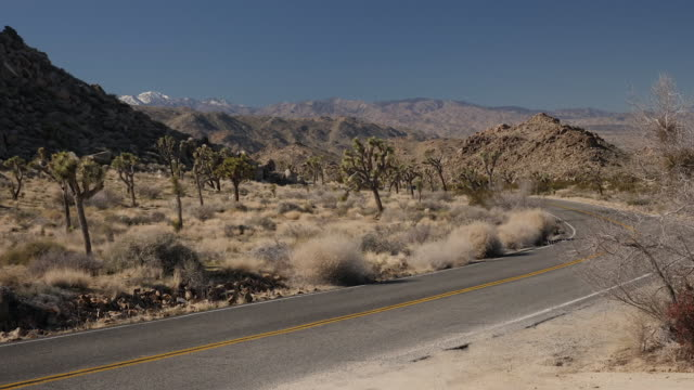 exterior shots of joshua trees, desert, sun and desert view from car window whilst driving at joshua tree national park on 3 january 2019 in... - joshua tree national park stock videos & royalty-free footage