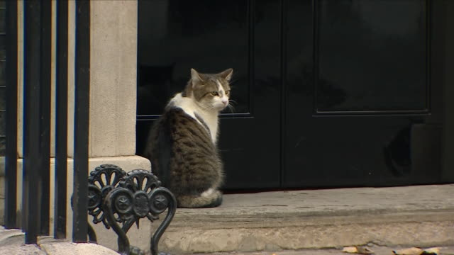 exterior shots of larry chief mouser to the cabinet office waiting to enter 10 downing street on 22nd october 2018 in london england - downing street stock videos and b-roll footage