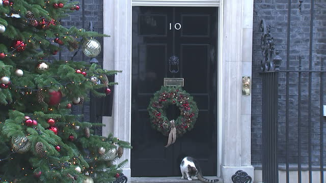 Exterior shots of Larry the Cat outside Number 10 Downing Street with its Christmas Tree before it is let in on 19 December 2017 in London United...