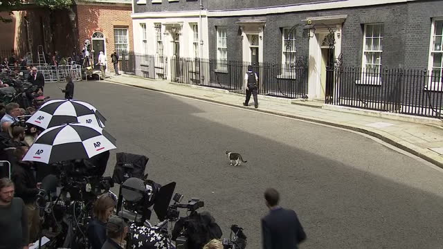 Exterior shots of Larry the cat walking around Downing Street stopping to look at the press line and rolling around on the pavement on July 13 2016...