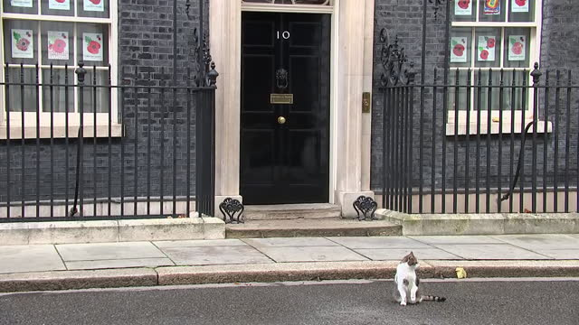exterior shots of larry the cat walking from 10 downing street on 12 november 2020 in london, united kingdom - vox populi stock videos & royalty-free footage