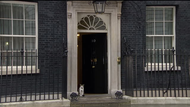 Exterior shots of Larry the Downing Street Cat on the steps of Number 10 Downing Street on May 08 2015 in London England