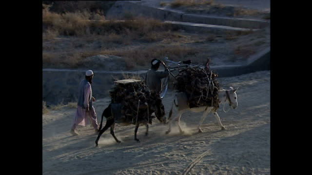 Exterior shots of local men driving donkeys laden with firewood and a train of camels passing near Bagram Airfield >> on October 24 2001 in Parwan...