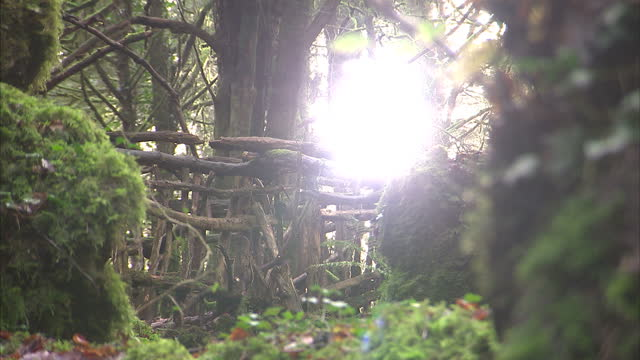 exterior shots of moss covered rocks walkways trees etc in the ancient woodland of puzzlewood in the forest of dean which has provided the backdrop... - moss stock videos & royalty-free footage