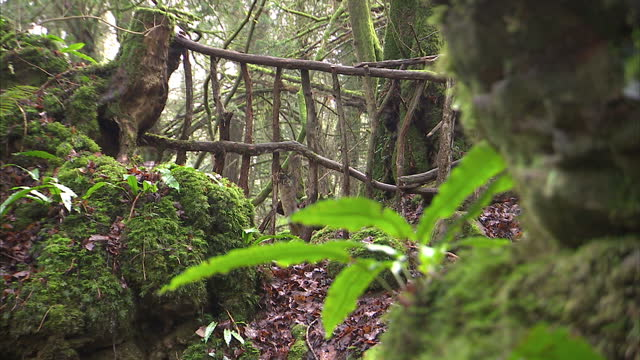 exterior shots of moss covered rocks walkways trees etc in the ancient woodland of puzzlewood in the forest of dean which has provided the backdrop... - gloucestershire stock videos and b-roll footage