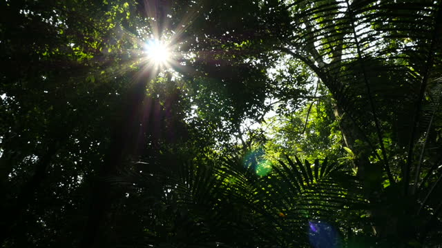exterior shots of palm fronds and forest trees with the sun shining through the forest canopy in cuc phuong national park on february 23, 2015 in... - pangolino video stock e b–roll
