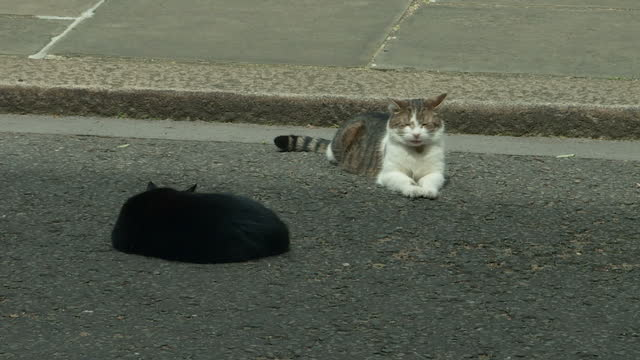exterior shots of palmerston and larry the cat next to each other in downing street on 7 july 2017 in london united kingdom - downing street stock-videos und b-roll-filmmaterial